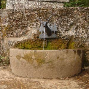 Foto Bosque Honfría